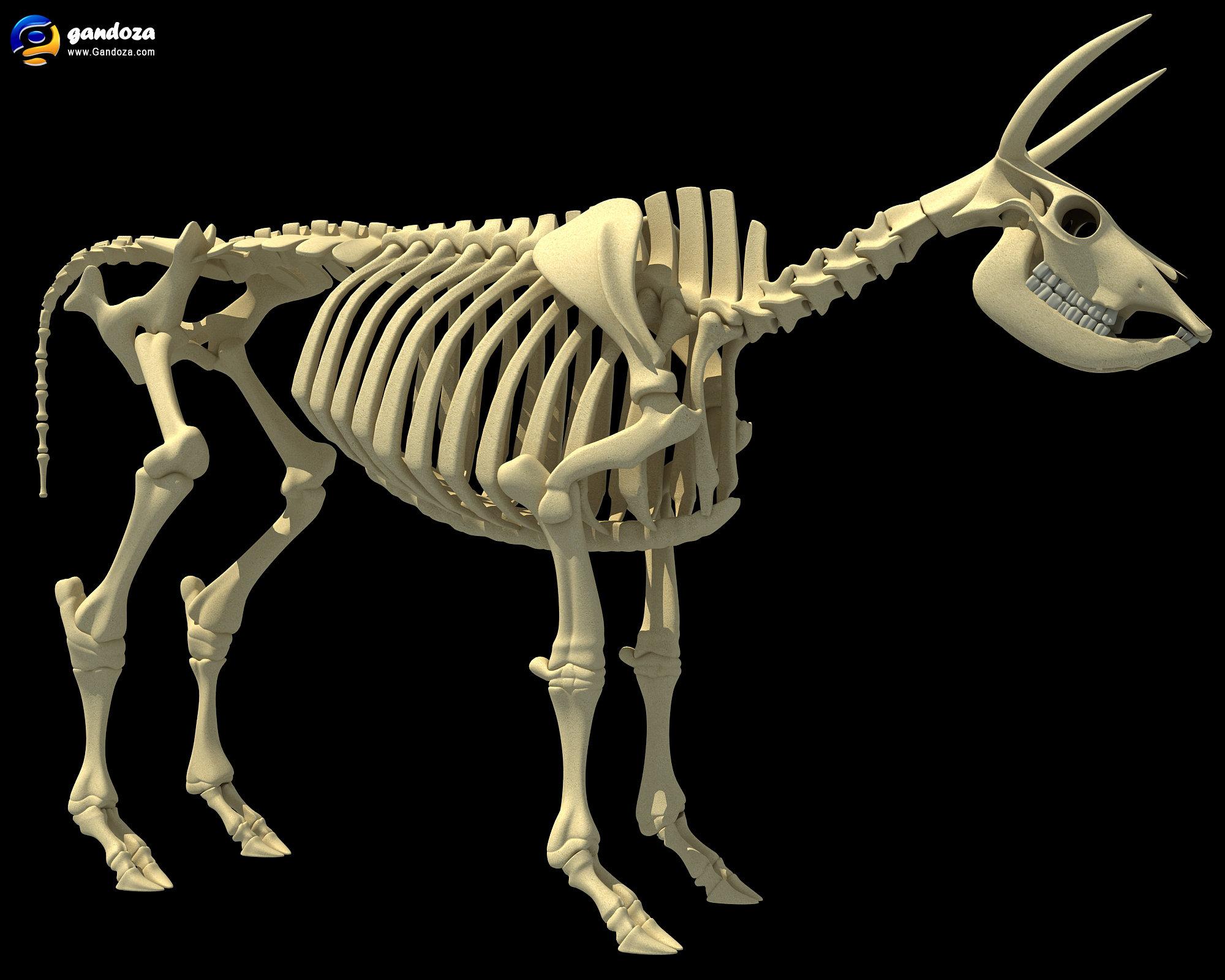 Dog Skeleton D Model Free Download