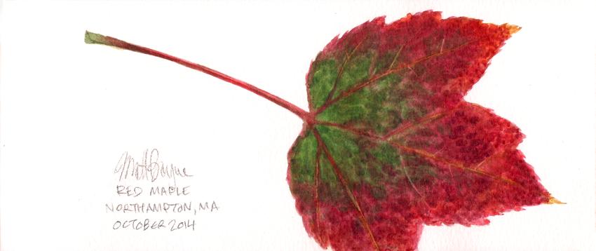 Red Maple Leaf by heymatt