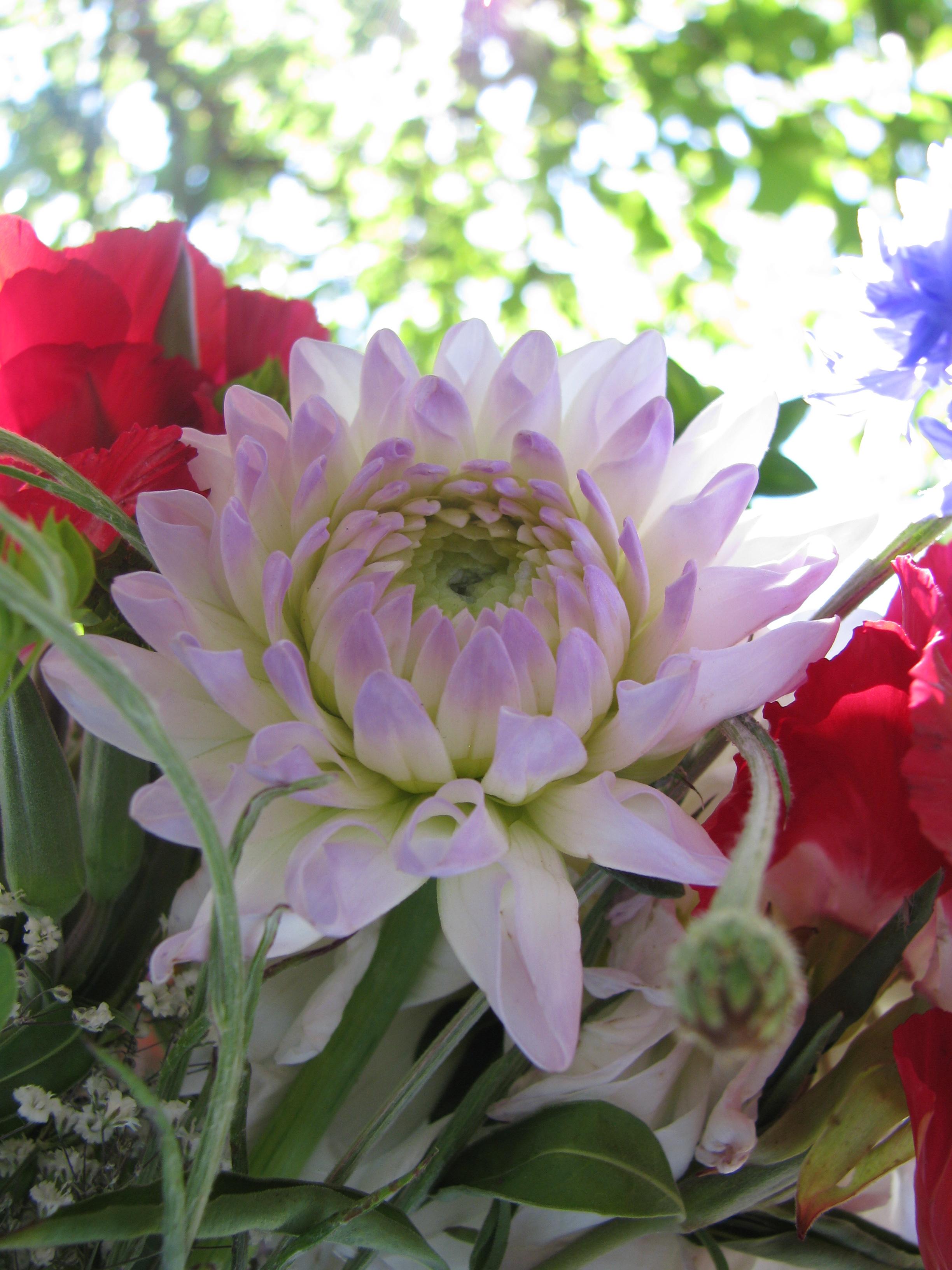 Definition Flower 3 by brat1 on DeviantArt