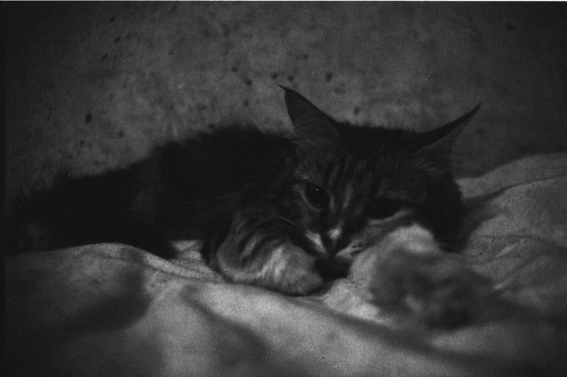 Katze by deliriostranger