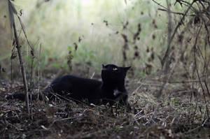 black cat by secret-mirror