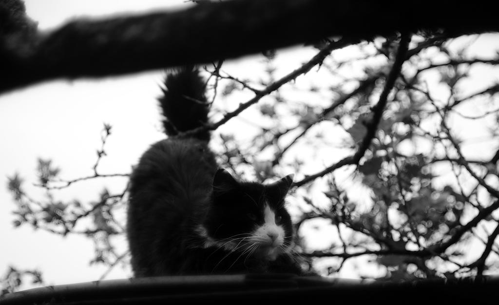 black and white cat by secret-mirror