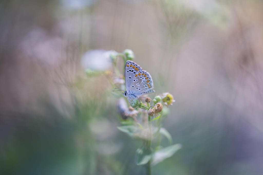 butterfly by secret-mirror