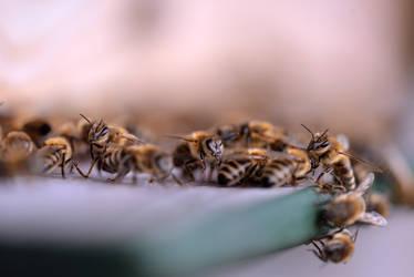 bee bee by secret-mirror