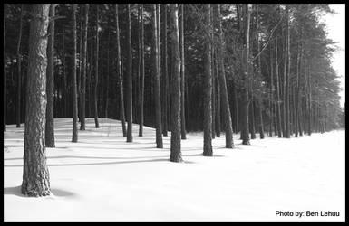Nature's Black and white