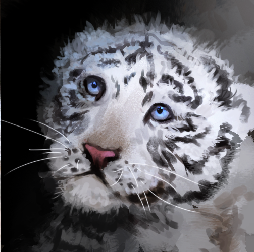 how to draw a white tiger cub