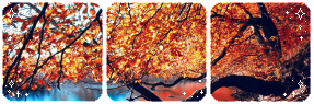 Yellow leaves l Divider by SileentDo