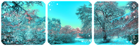 Winter forest l Divider by SileentDo