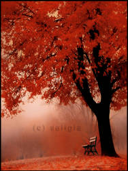 under_red_tree