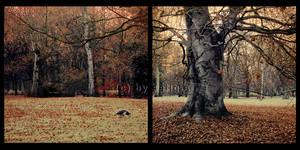 my past autumn