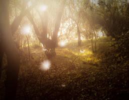 Fotonostalgia 2psd by rodia90
