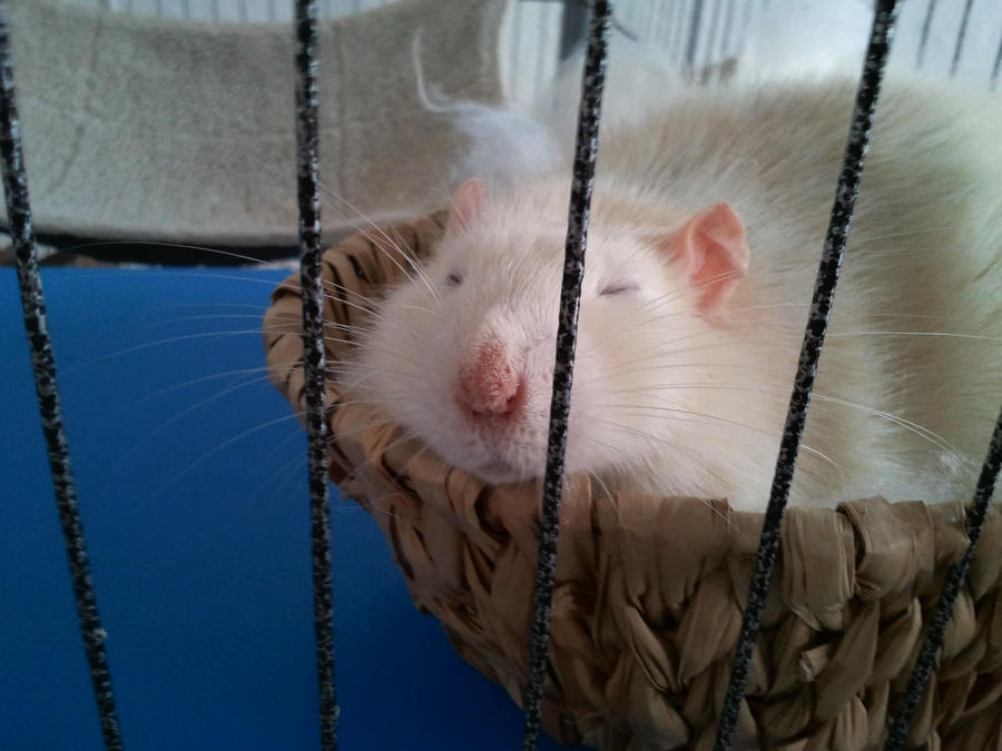 Nap Time by MilkaHedgehog