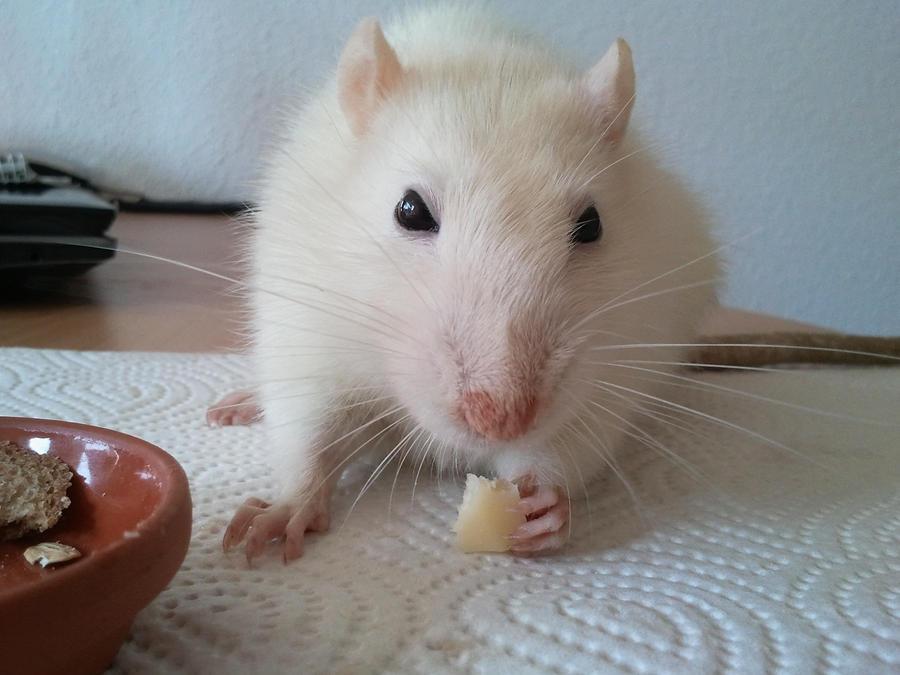 Cheese by MilkaHedgehog