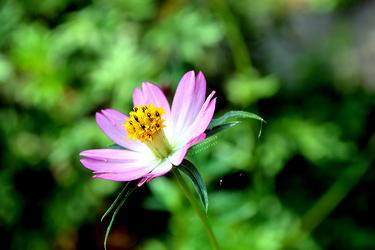 Flower by MikaVKlover