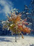 Fall vs. Winter by Dunskap