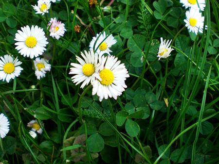 hello daisy by dusza-kd