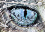The Eye of The Predator