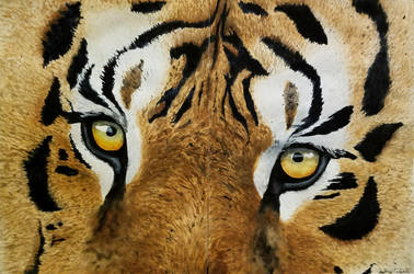 Tiger Eyes by SRfineArt