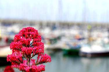 harbour by HeineD