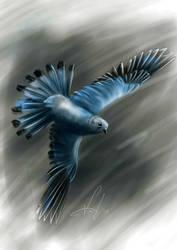 Wild Blue by sandygrimm2000