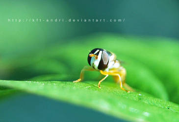 hover by KFT-Andri