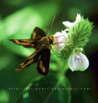 butterfly IV by KFT-Andri