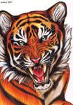 Tiger by arsnoctu