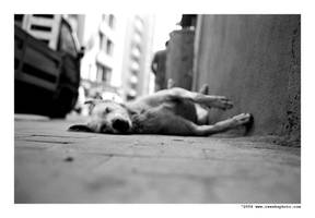 homeless dog by cweeks