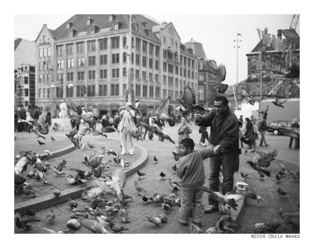 pigeon attack by cweeks
