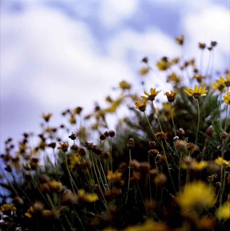 Pick a Flower by scottjamesprebble