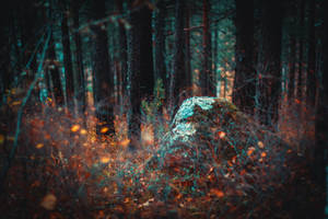 the Forest: Autumn fire by LoginOFF