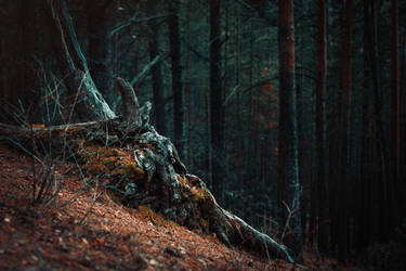 the Forest: Old Root by LoginOFF