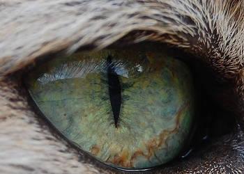 The Eye by Mararda