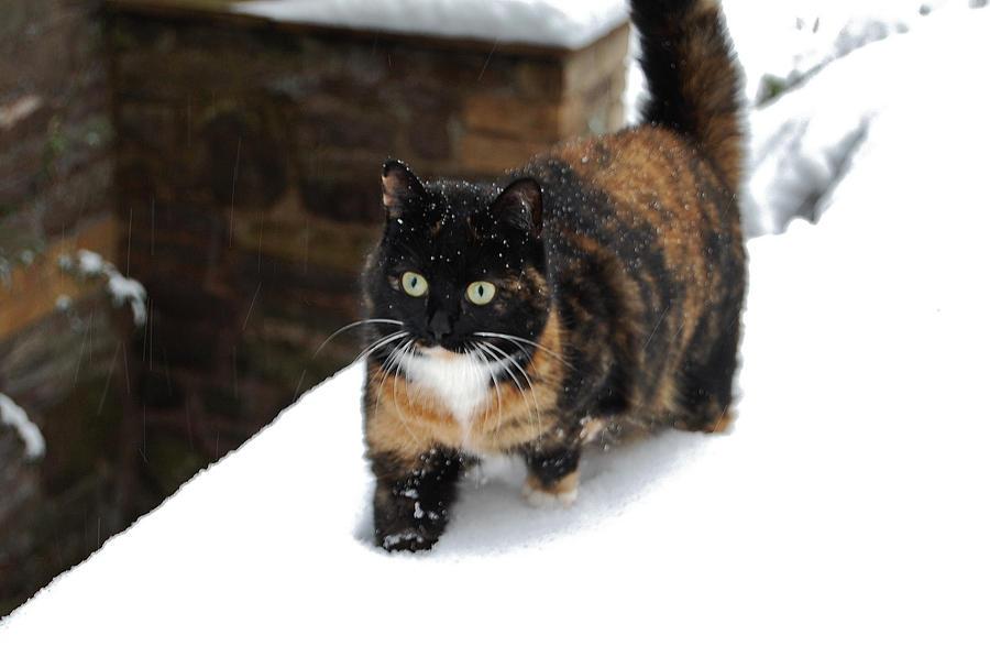 Emily's Snow Experience by Mararda