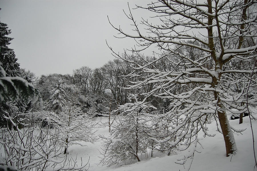 Winterland by Mararda
