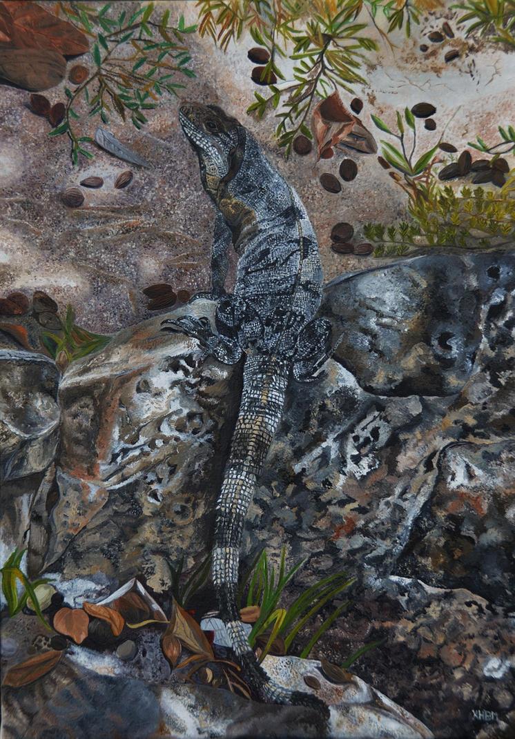 Black Iguana by Mararda