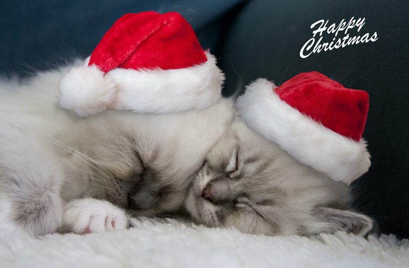 Merry Christmas Animals.Merry Christmas Animals Voitures Americaines Info