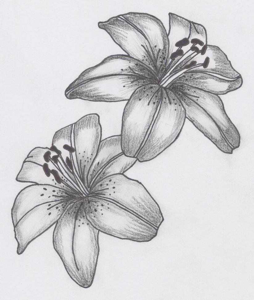 Tattoo lily by siren757 on deviantart tattoo lily by siren757 izmirmasajfo