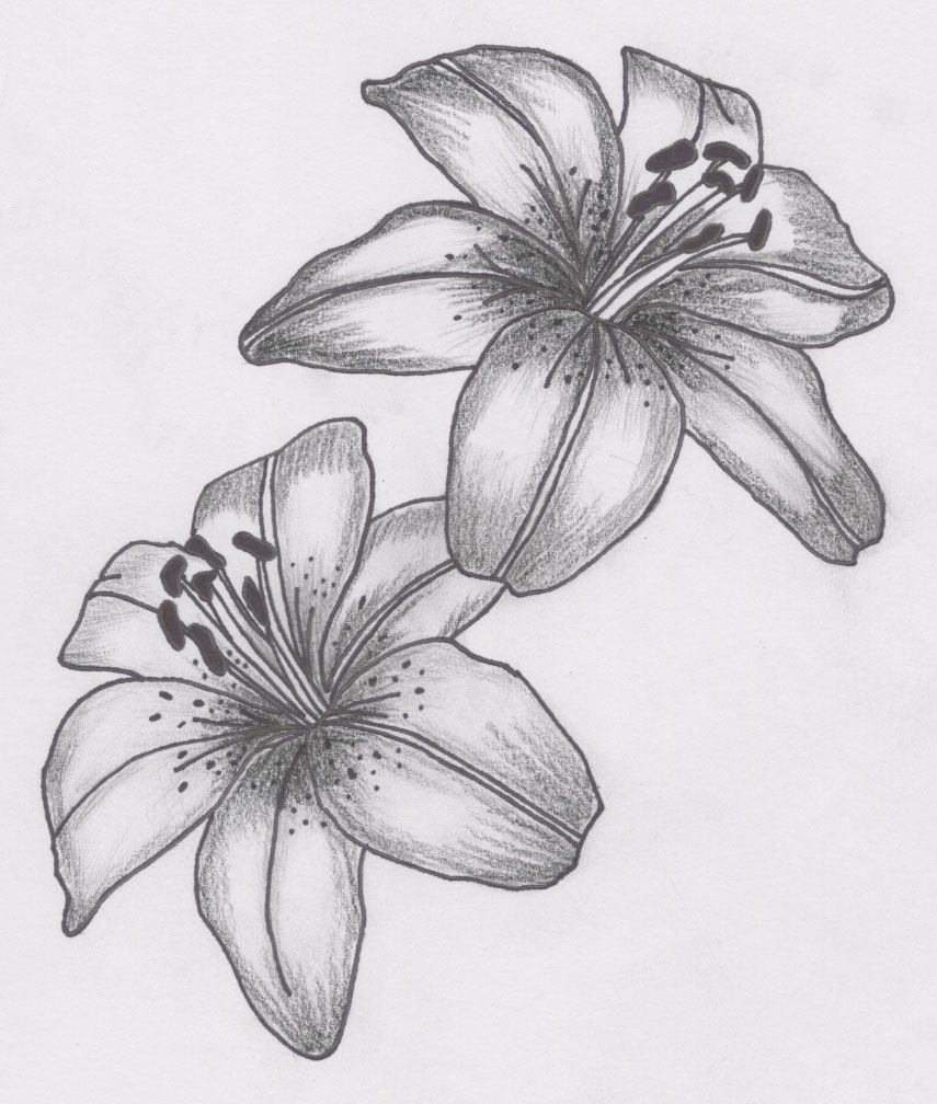 tattoo lily by siren757 traditional art drawings technical drawings    Lily Flower Drawings In Pencil
