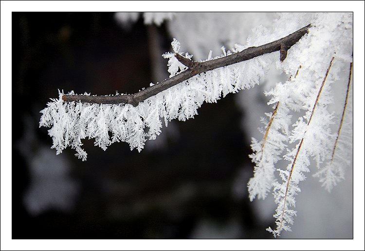 winter close-up by kovalvs