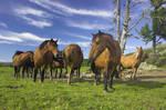 horses landscape
