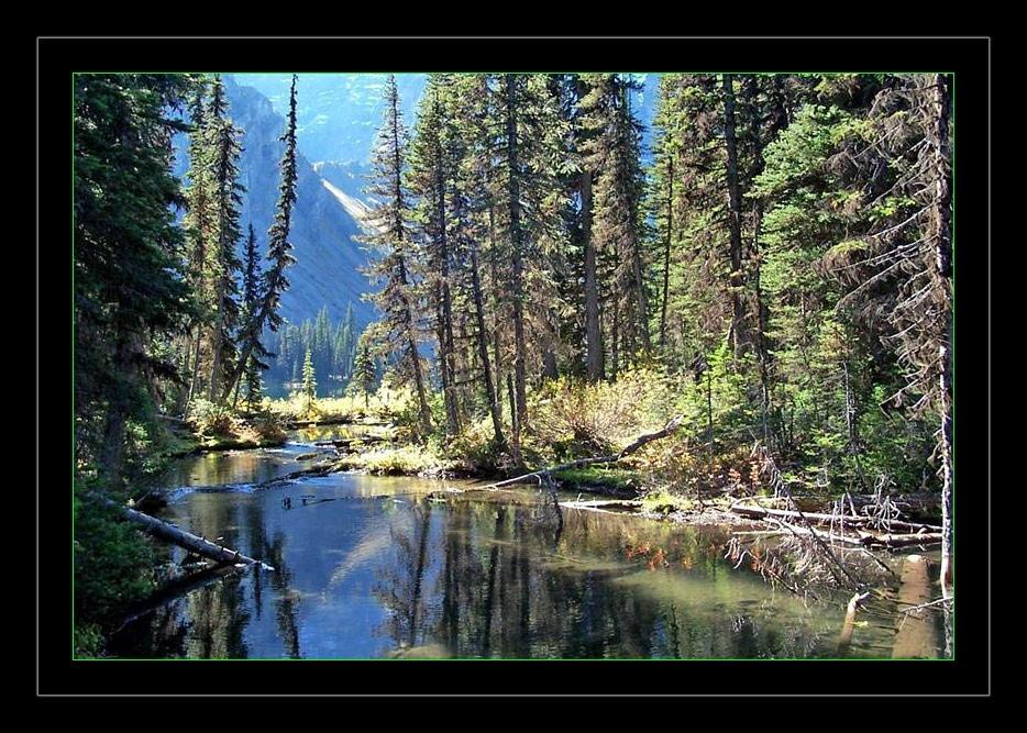 Fallen Tree Creek by CaroleLee