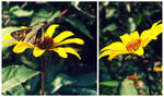 The Yellow Flower and the Moth
