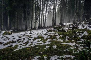 Forest Diverse by XopekFerret