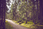 path in woods 2