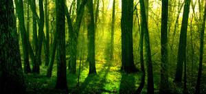 Walking in the woods by glassocean