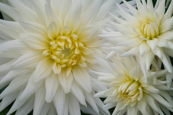 The Flowers That Be - I by miravisu
