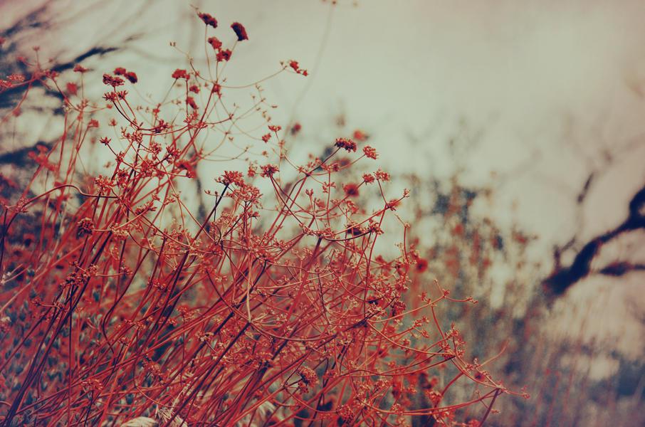 Red Weed II by EmiNguyen