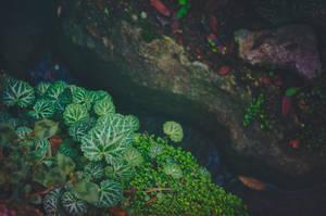 Along the River II by EmiNguyen
