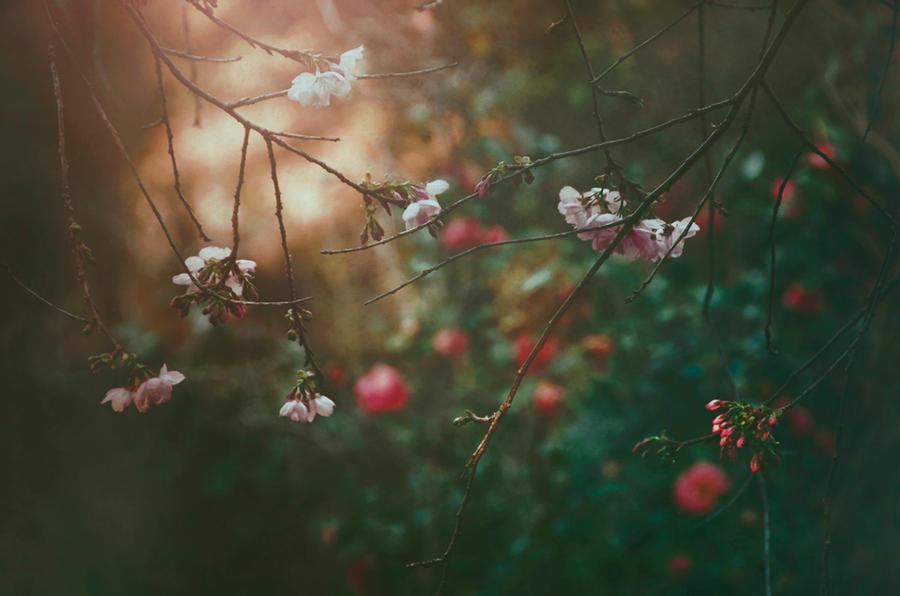 Fleeting Glimpse of You by EmiNguyen